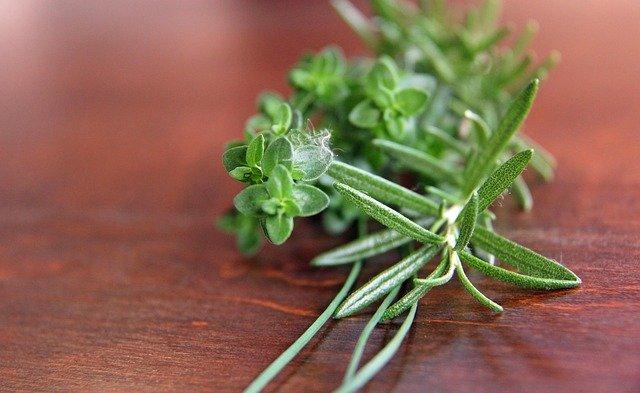 使い方 ローズ マリー ローズマリーの育て方|苗の鉢植えでの栽培や室内で育てるコツは?